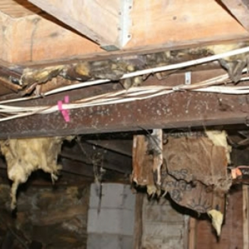 How To Tell If My House Has Mold