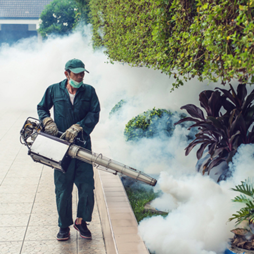 killing bugs could cost you your life