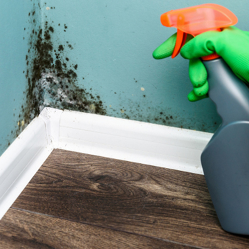 health risk of mold