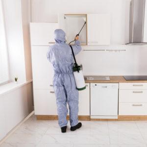 hiring professional pest control