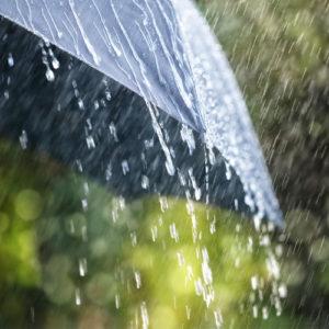 rain brings termites