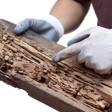three reasons to get a termite inspection