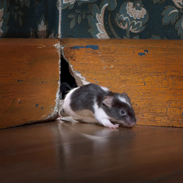 keep mice out this fall