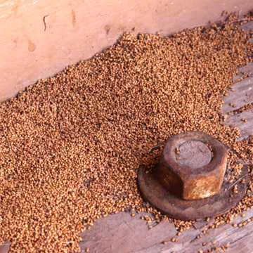 how often should i get termite inspection