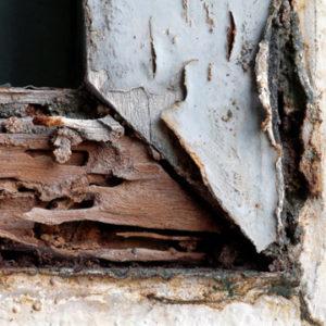 termite warranty