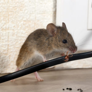 hiring the right pest technician
