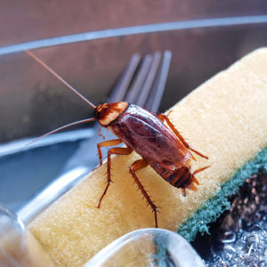 why cockroaches come inside