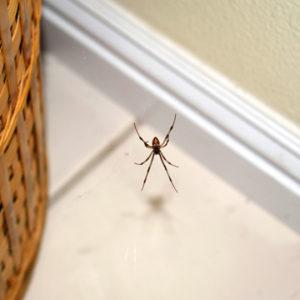 common pest