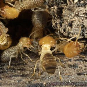 get rid of termites in murfreesboro
