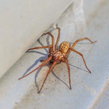 spiders in nashville home