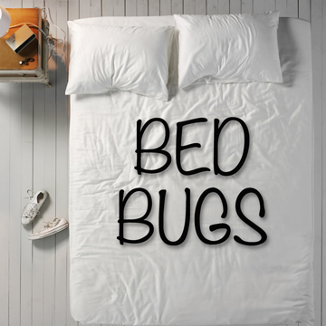 bedbugs difficult to treat