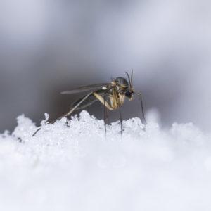 pest control in winter