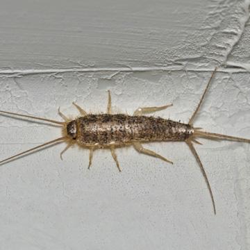 common crawlspace pest