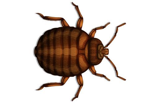 Bed Bugs Nashville