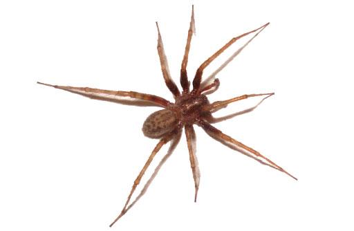 House Spiders Nashville
