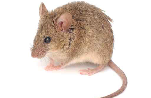 Mouse Control Nashville