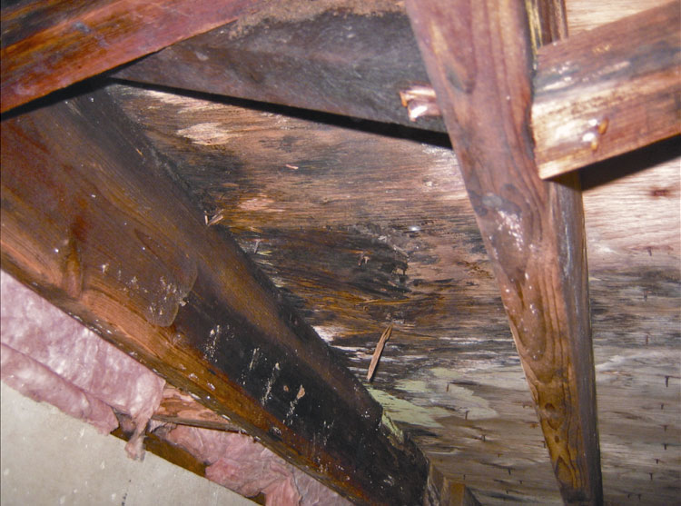 Mold And Mildew Removal Nashville Murfreesboro Jackson Franklin Mt Juliet