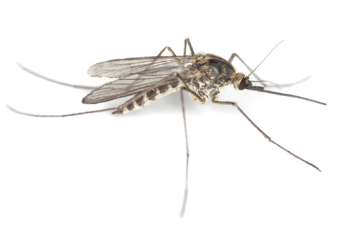 Mosquito control Nashville, Murfreesboro, Mt. Juliet and Franklin TN