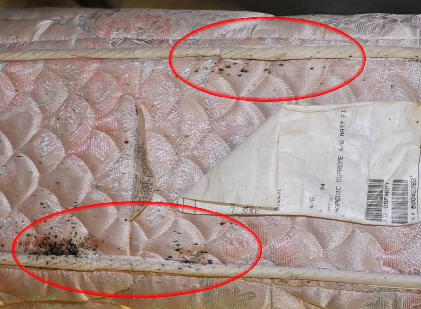 Bed Bug Inspection Nashville, Murfreesboro, Mt. Juliet and Franklin Tennessee